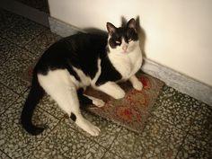 blog di Sara: Miro, il gatto comunista