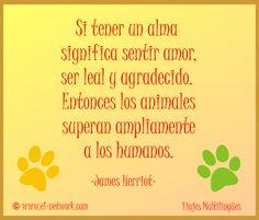 Si tener un alma significa sentir amor, ser leal y agradecido. Entonces los animales superan ampliamente a los humanos. -James Herriot- www.e1-network.com