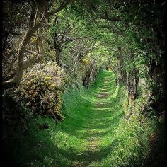 Ancient Road, Ballynoe, Co Down, Ireland