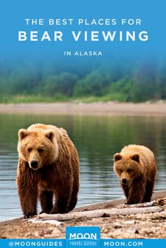 Here's where to go to spot majestic brown bears, black bears, and polar bears across Alaska, including national parks and wildlife refuges. Beautiful Places To Visit, Cool Places To Visit, Travel Guides, Travel Tips, Ultimate Travel, Plan Your Trip, Outdoor Travel, Outdoor Activities, Travel Usa