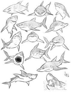 Animal Studies: Great White Sharks by Tigerhawk01.deviantart.com on @DeviantArt