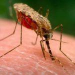 Vyzkoušejte tento vitamín k odpuzování komárů