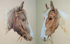 Pferdeportraits Farbstiftzeichnungen