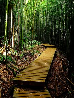 Top 5 favorite hiking trails in the Islands: HAWAII Magazine Facebook poll results by Maureen O'Connell | HAWAII Magazine | Hawaii news, events, places, dining, travel tips & deals, photos | Oahu, Maui, Big Island, Kauai, Lanai, Molokai: The Best of Hawaii