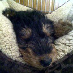 Sweet little sleepy face.