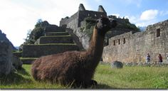 enjoy the Machu picchu sanctuary in Cusco, great monument of Incas