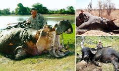 Dr Jan Seski is accused of killing lion in illegal hunt in Zimbabwe | Daily Mail Online