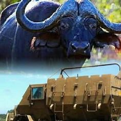 Defence Force, War Machine, South Africa, Moose Art, African, Military, Apartheid, Animals, Animais