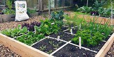 Makkelijke Moestuinbakken: vlak bij het huis Vegetable Garden, Backyard, Outdoor Structures, Vegetables, Plants, Diy, Secret Gardens, Gardening, Fruit