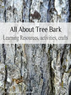B is for Bark. Activities, crafts, and resources for studying tree bark.