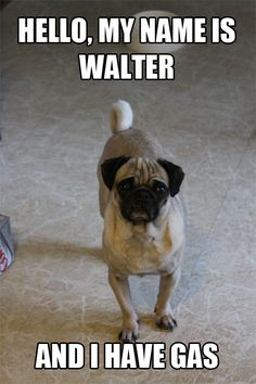 Hello, My name is Walter and I have gas.