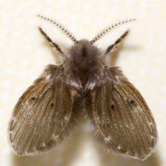Spooky moth inspiration