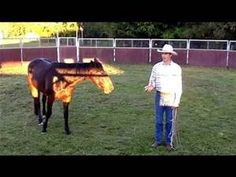 Solving Catching Problems with Your Horse Part 2 - Bing video