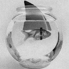 gold/shark fish