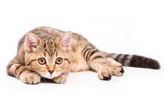 Defensas de león Receta BARF gatos www.puromenu.es