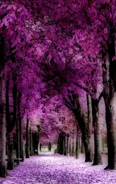 The 2014 PANTONE Color of the Year is Radiant Orchid.Found this color for hair at Sally's in their Ion Neons in Radiant Orchid. Beautiful World, Beautiful Places, Beautiful Flowers, Gorgeous Gorgeous, Beautiful Forest, Tree Tunnel, Nature Landscape, Color Of The Year, Amazing Nature