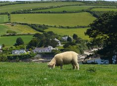 Just in Roseland, Cornwall Seaside Village, Cornwall, Golf Courses, Places, Lugares