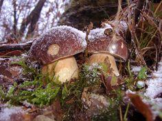 Funghi e fate agriturismo bed & breakfast nell'appennino parmense, Albareto, Borgo val di Taro, funghi porcini