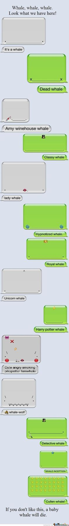 Funny pictures about Different types of whales. Oh, and cool pics about Different types of whales. Also, Different types of whales photos. Stupid Funny, The Funny, Hilarious Texts, Funny Stuff, Random Stuff, Whale Text, Haha, Baby Whale, All Meme