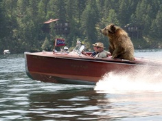 wooden boat - hey guys - there is a bear behind you