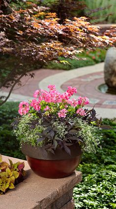 Proven Winners | Container Garden Design - Structure