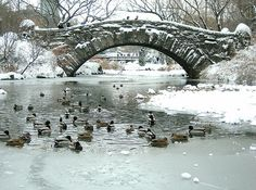 """Central Park. Pond with ducks. """"The Catcher in the Rye"""", J.D. Salinger.    Central Park. Laghetto con anatre. """"Il giovane Holden"""", J.D. Salinger.    Foto-tweet di @alessiascurati"""