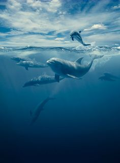 Some Unique and Rare Photography OF Some Amazing Wildlife Animals OF The DAyThanks Orcas, Photo Ocean, Bottlenose Dolphin, All Nature, Underwater World, Sea World, Ocean Life, Marine Life, Whales