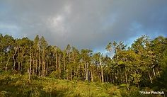 'Eua National Park - Wikipedia Forests, National Parks, Mountains, Outdoor, Usa, Outdoors, Woodland Forest, Outdoor Games, Woods