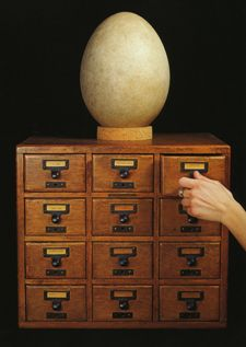 Harvard University's Museum of Comparative Zoology's Employment Page features a lovely card catalog and the Museum's Elephant bird egg. (More on those here: http://pinterest.com/pin/175218241725035230/ ) Photo: Mark Sloan from The Rarest of the Rare, 2004.