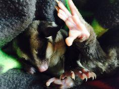 Little Benjamin showing his sleepy jazz foot