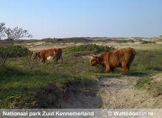 Nationaal park Zuid Kennemerland