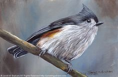 Tufted Titmouse No 10 by Janet Graham Acrylic ~ 4 inches x 6 inches