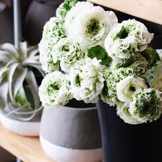 We've been swooning over these ranunculus all day 😍 Want them in YOUR custom floral arrangement? Order now and we can deliver tomorrow! Ranunculus, Flower Delivery, Floral Arrangements, Greenery, Monday Friday, Flowers, Plants, Persian Buttercup, Flower Arrangement