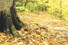 9 Amazing Cleveland Hikes Under 3 Miles You'll Absolutely Love Kundalini Reiki, Ohio Destinations, Woodland Indians, Hiking Places, Sound Healing, Reiki Energy, Aquatic Plants, Best Vibrators, Alternative Energy