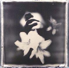 Andrew Millar instant Photography : Photo