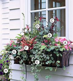 from BHG A. Impatiens Accent Pink Picotee -- 2 B. Hosta Golden Tiara -- 1 C. Jacobs Ladder (Polemonium Brise dAnjou) -- 1 D. Fuchsia Thalia -- 2 E. Ground ivy (Glechoma hederacea Variegata) -- 3 F. Window Box Plants, Window Box Flowers, Window Boxes, Flower Boxes, Container Plants, Container Gardening, Succulent Containers, Gardening Tools, Container Flowers