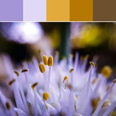 《Macro Flower Palette》