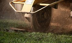 Stump Grinders and Stump Grinding Services: Things to Consider.  Before grinding down the stump of your removed tree, check out these tips.