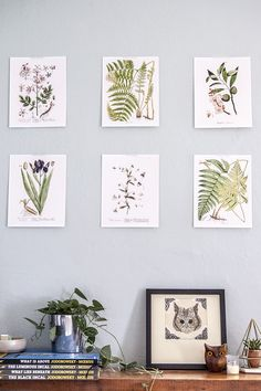 Free printable botanical art