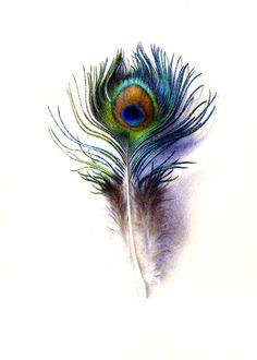 Moore Charles Peacock Feather Canvas 16 x 20 | eBay