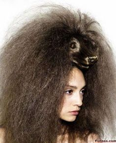 Animals Look hairstyle- Poodle