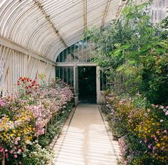 Green house- I'm not a skilled gardener but I love the atmosphere of green houses and gardens