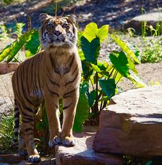 Indrah Garra, In The Zoo, Wild And Free, Big Cats, Animal Pictures, Snake, Wildlife, Pets, Nature
