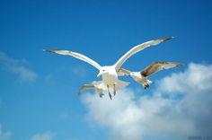 Lazy, Bird, Animals, Animales, Animaux, Birds, Animal, Animais