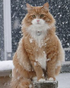 kitty in the snow..