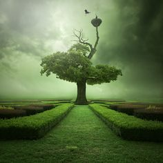 Tree. The Hedge.