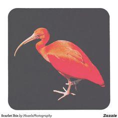 Scarlet Ibis Square Paper Coaster