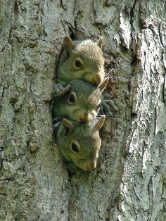 3 Baby Squirrels