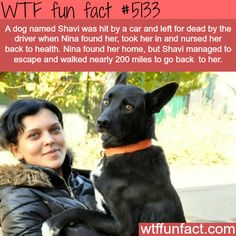 A dogs walks for 200 miles to find the person that saved him - WTF fun facts