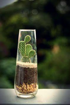 Resultado de imagem para arranjo de cactus com casca de pinus